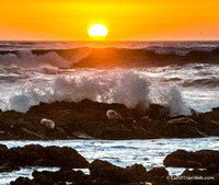 Some seals under the waves breaking on the rocks at sunset.