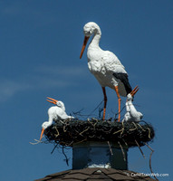 Fake Storks near Hwy. 101 on Alisal Rd