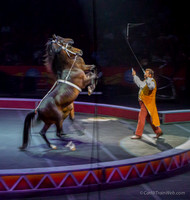 Robert Stipka presents an amazing display of synchronized horses