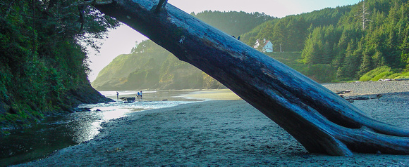 Heceta Head Lighthouse, Keepers' Quarters, Cape Creek and Cove beyond the leaning tree.